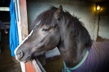 bpp bea equine chiropractic-184