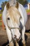 bpp bea equine chiropractic-574
